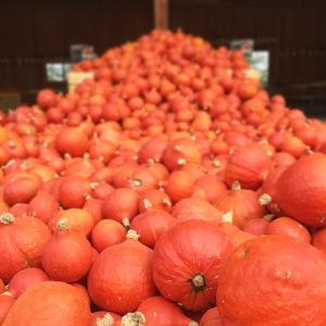 Oranger Knirps oder Hokkaido